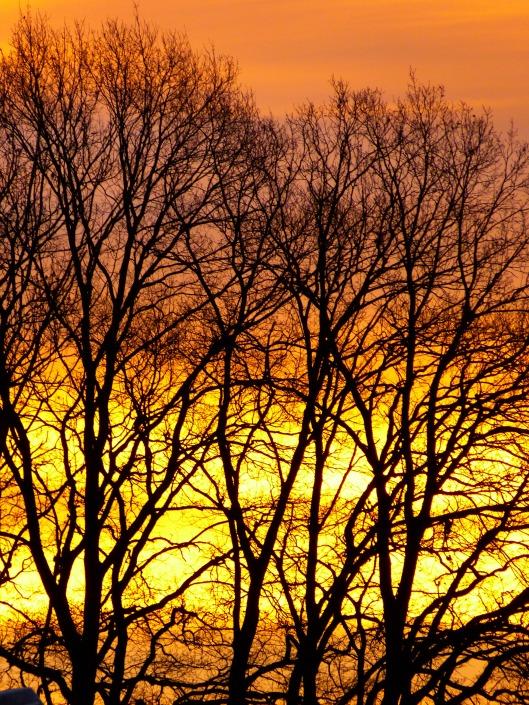 sunrise_winter_sunrise_skies