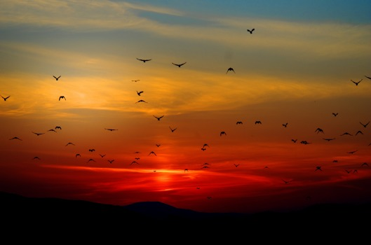 sunset_birds_clouds