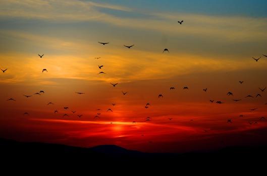 sunset_birds_clouds