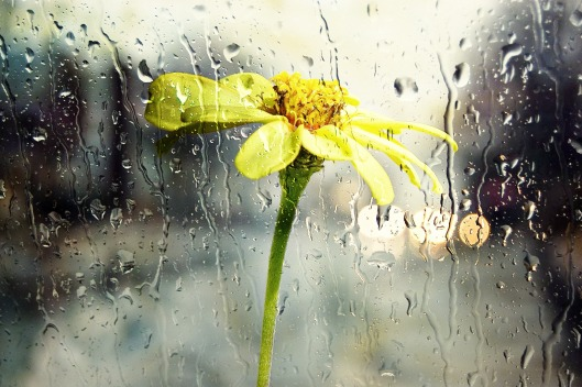 rain_wet_window